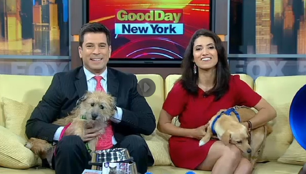 Pet Guru Wendy Diamond features the Hydro Bone on NYC Morning Show