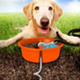 Better Tether has great showing at Global Pet Expo